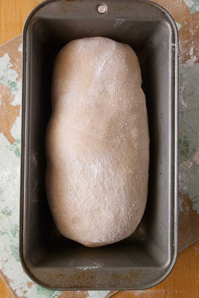 Whole wheat loaf in a bread pan to rise.